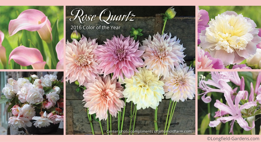 RoseQuartz Color of the Year 2016.jpg