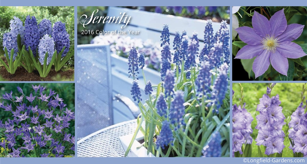 Serenity color of the year 2016.jpg