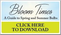 Click here to download Bloom Times
