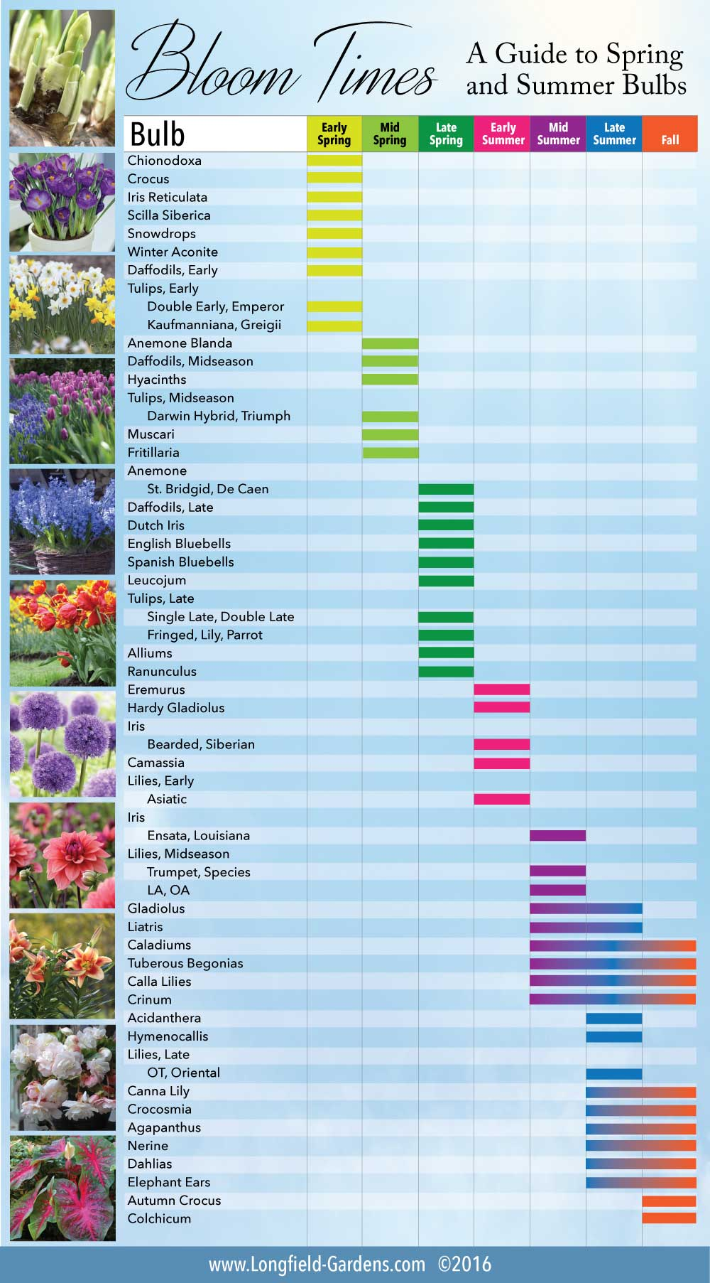 Bloom Time Chart For Spring And Summer Bulbs Longfield Gardens
