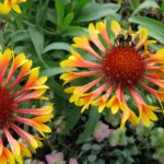 Best Garden Flowers to Attract Bees