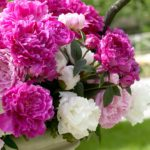 How to Extend the Peony Season