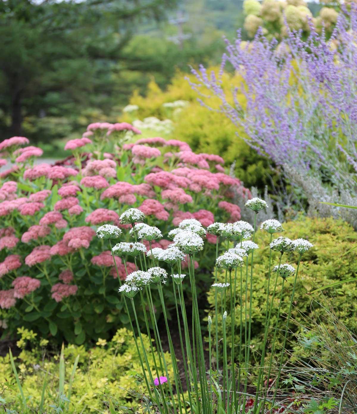 late-summer-garden.jpg