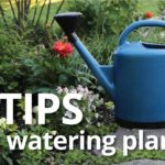 Best Practices for Watering Plants
