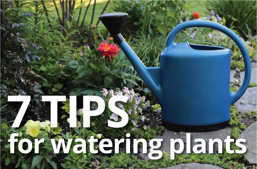 Best practices for watering plants longfield gardens - How often to water vegetable garden ...