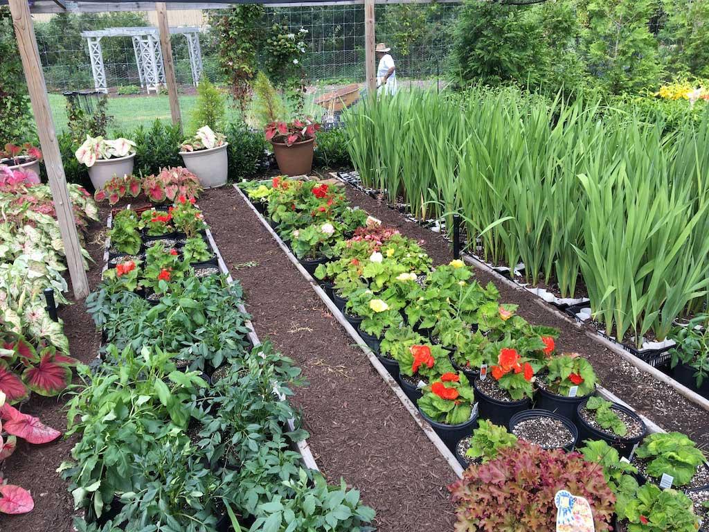 LFG-trial-garden-2016.jpg