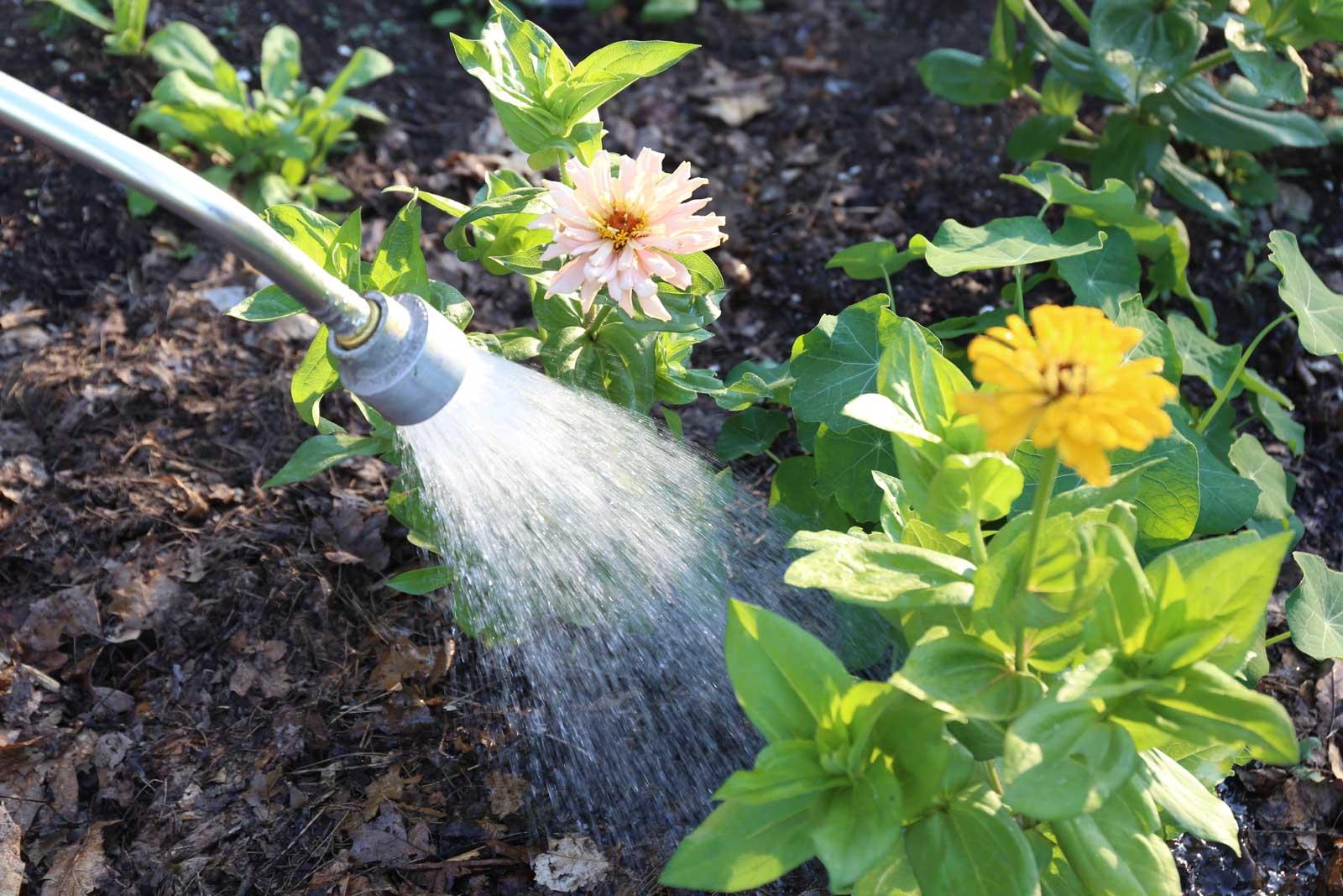 7 Tips for Watering Plants - Longfield Gardens