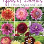 Know Your Dahlias: Flower Styles and Sizes