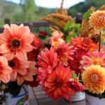 Top Performing Dahlias for Summer 2016