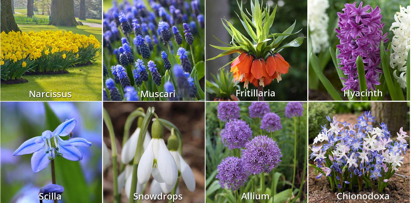 How to Protect Fall Bulbs from Chipmunks and Squirrels - Longfield-Gardens