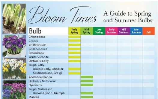 Bloom times guide to spring and summer bulbs longfield gardens this handy chart lists 50 kinds of flower bulbs and when you can expect them to bloom if you want a non stop succession of flowers simply plant a few mightylinksfo