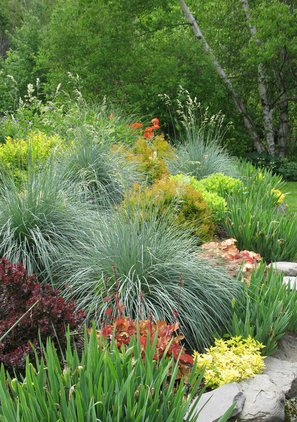 Spring garden checklist for a low maintenance flower for Low maintenance summer plants