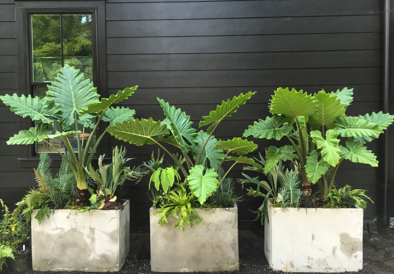 High Impact Container Gardens - Longfield Gardens