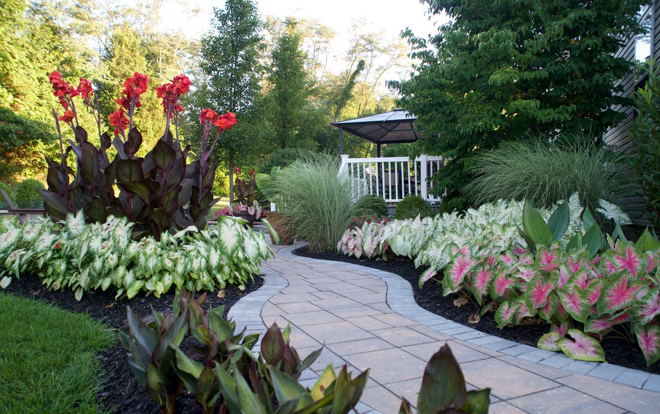 Landscaping Made Easy With Caladiums - Longfield Gardens on Long Backyard Landscaping Ideas id=24737