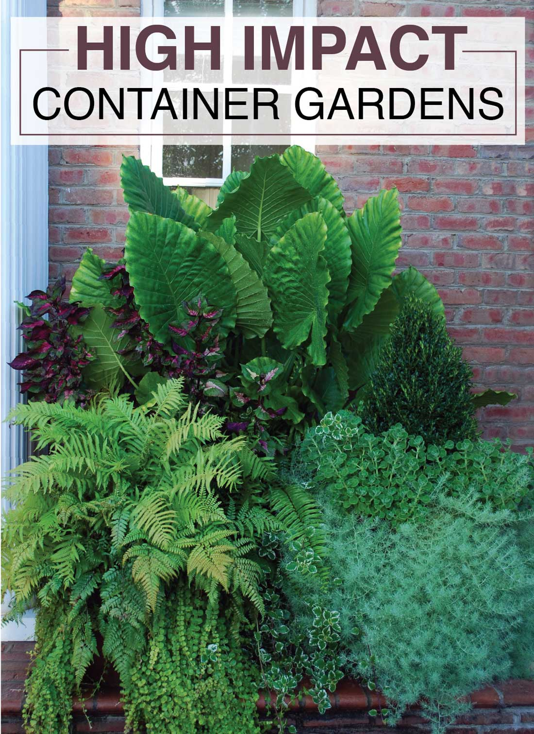 High Impact Container Gardens