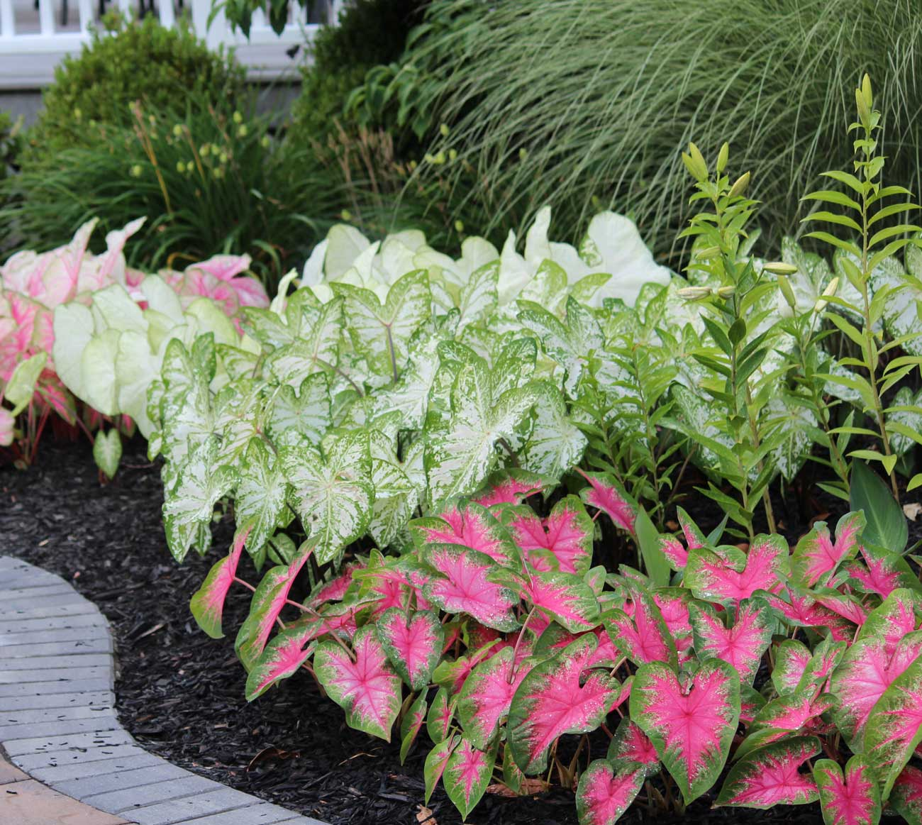 10 Bulb Garden Design Ideas: Landscaping Made Easy With Caladiums