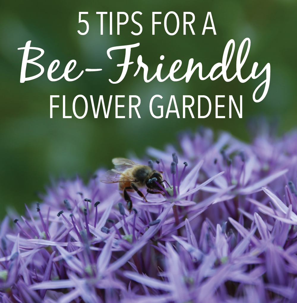 5 Tips for a More Bee-Friendly Flower Garden