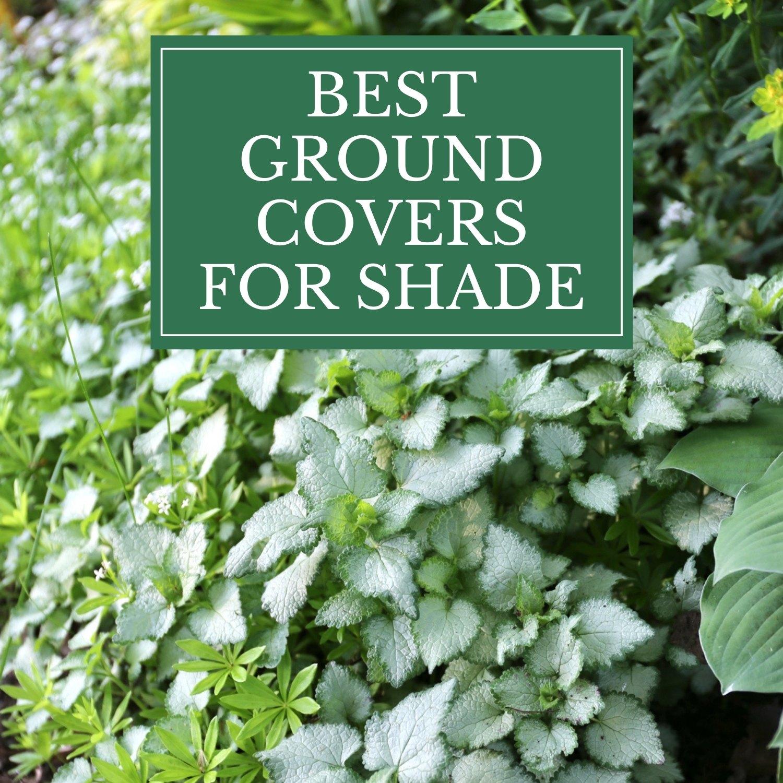 Copy of 10 Easy Perennials for Shade