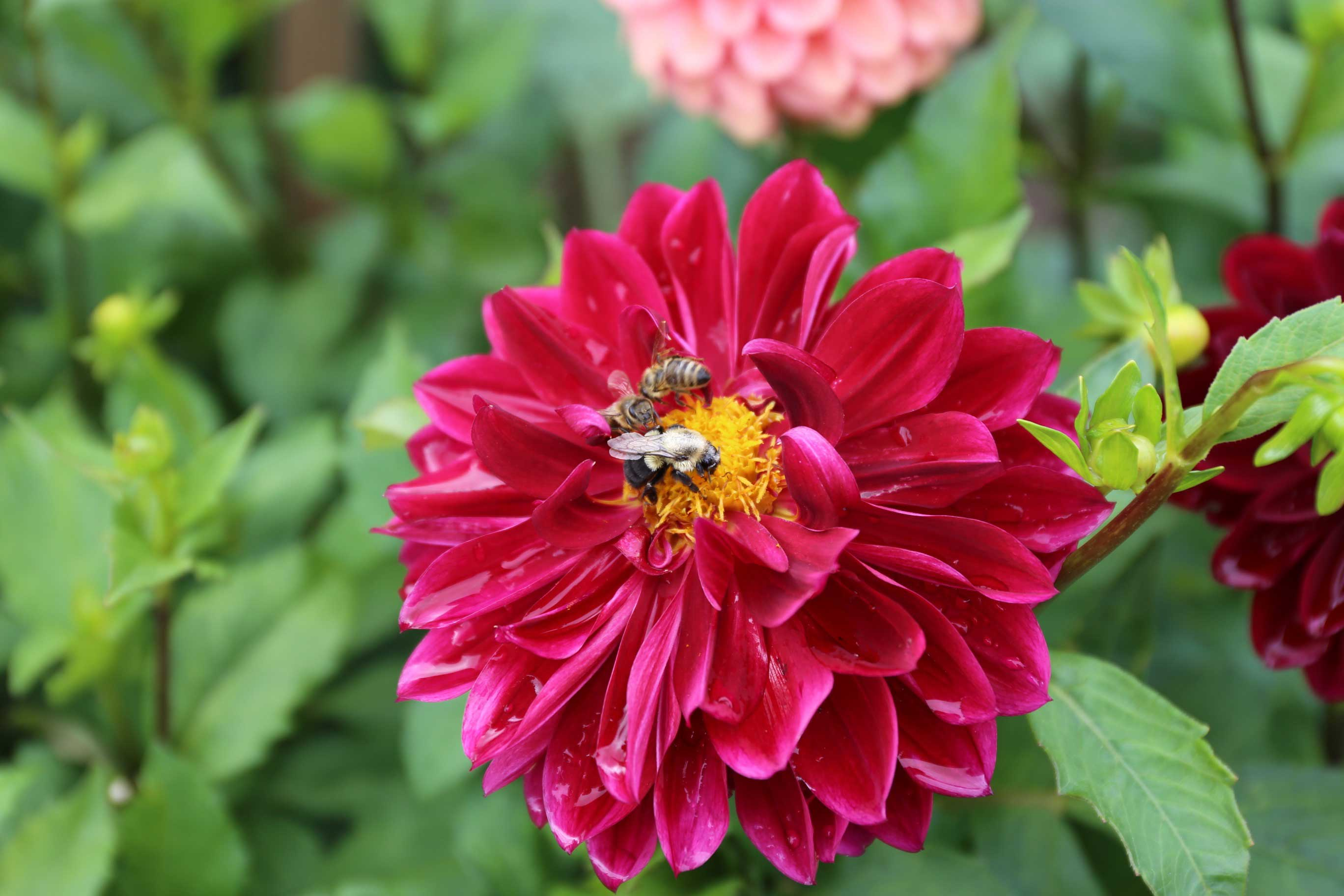Tips for a More Bee-Friendly Flower Garden - Longfield-Gardens