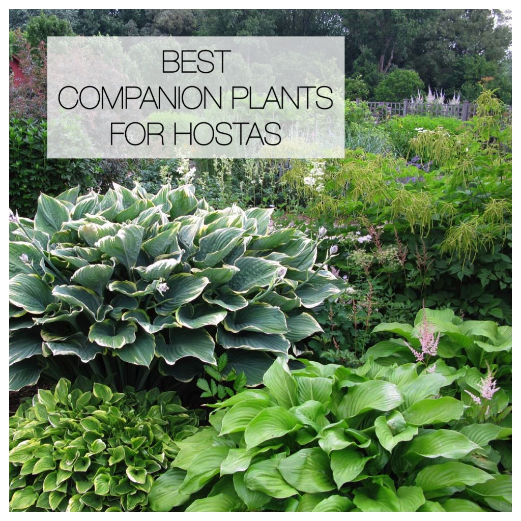 12 Amazing Ideas For Flower Beds Around Trees: 12 Best Companion Plants For Hostas