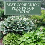 12 Best Companion Plants for Hostas