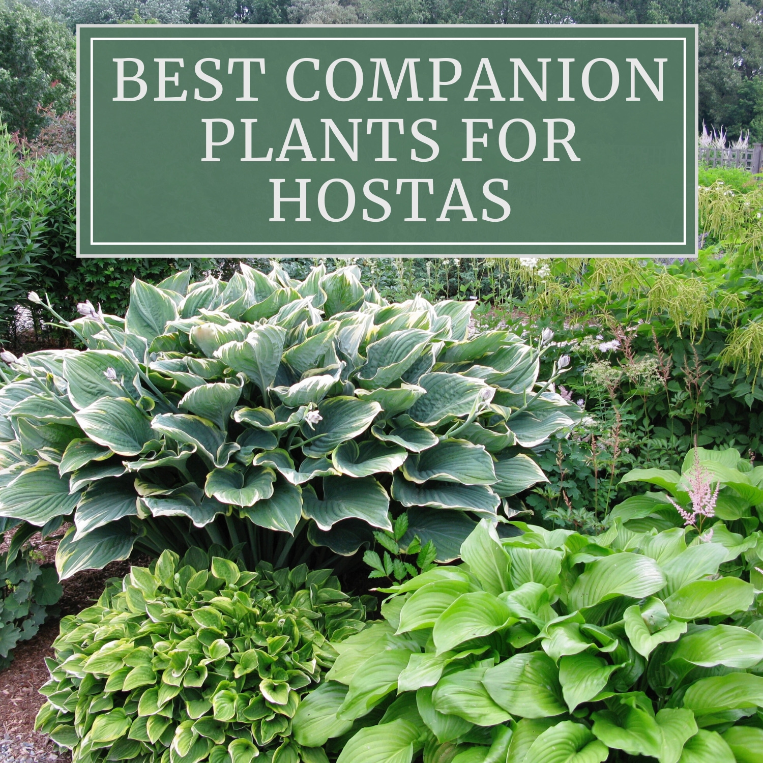 Locations What Grows Here Favorite Plants for Better Yards