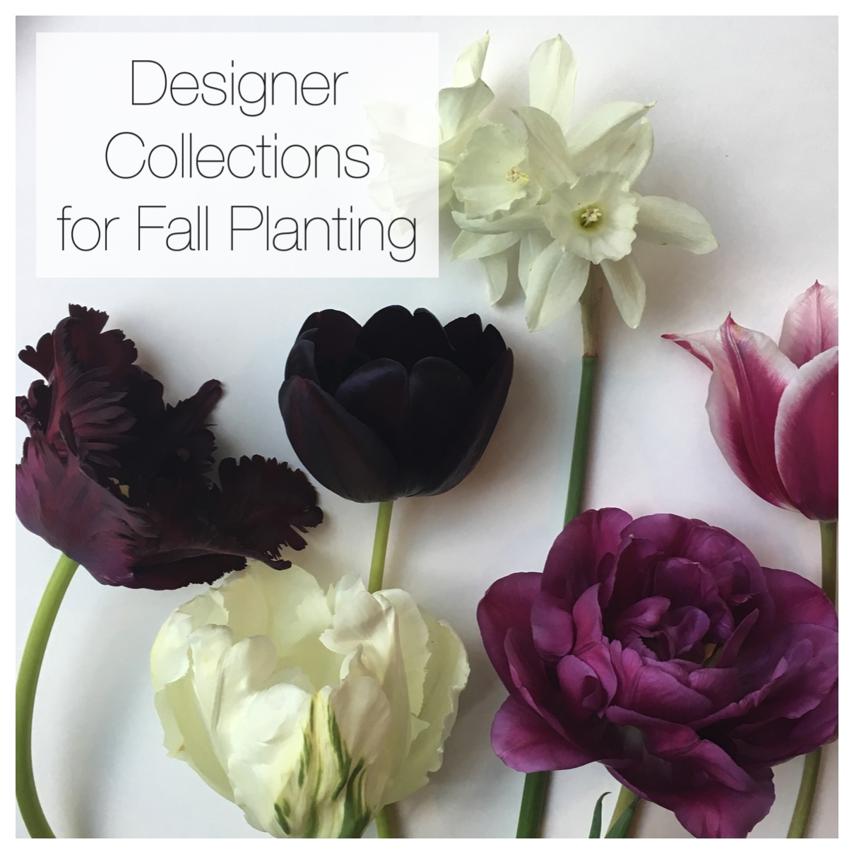 New Flirty Fleurs Designer Collections for Fall Planting
