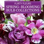 New Flirty Fleurs Spring-Blooming Bulb Collections