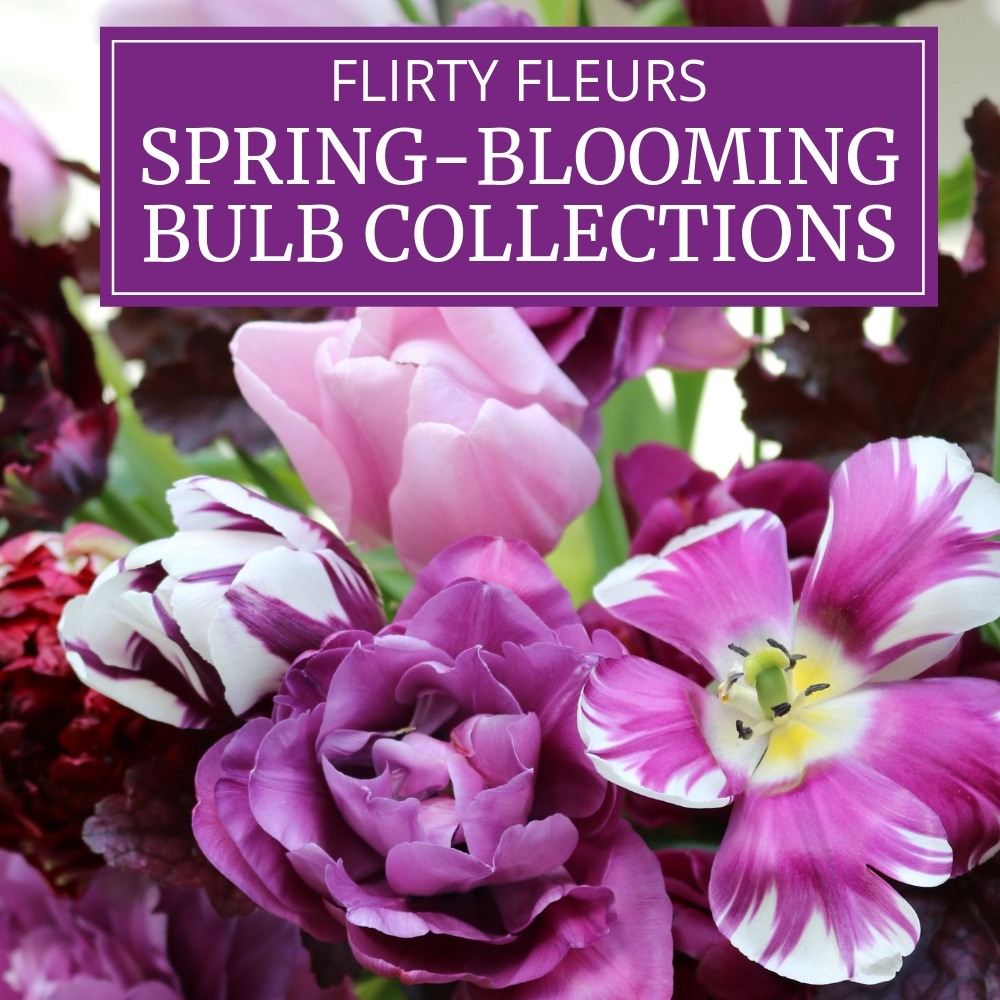 Spring-Blooming Bulb Collections from Flirty Fleurs - Longfield Gardens