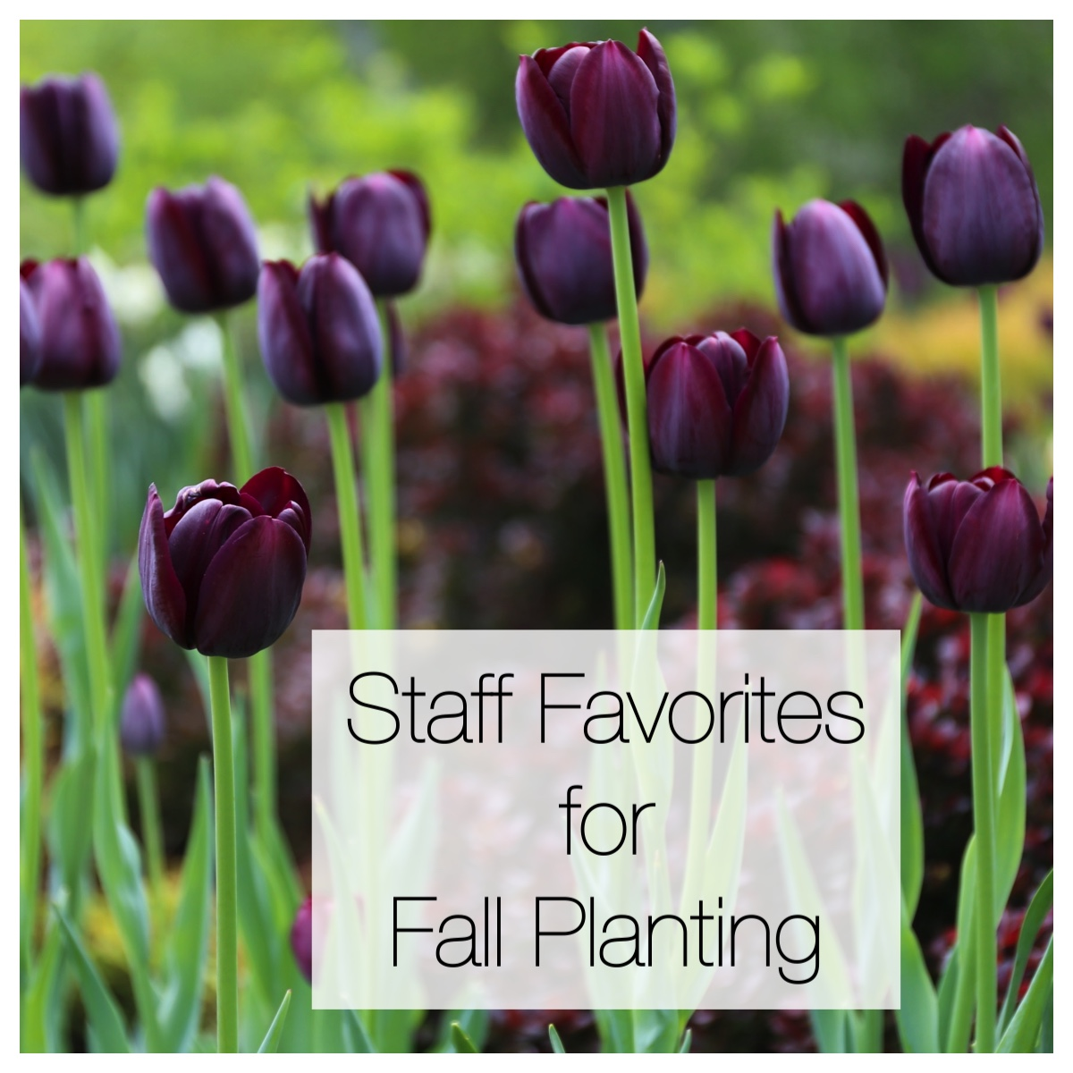 This Year's Staff Favorites for Fall Planting