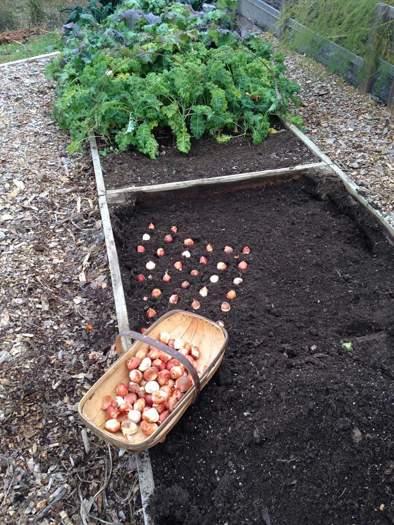 Out with Tomatoes In With Tulips - Longfield-Gardens