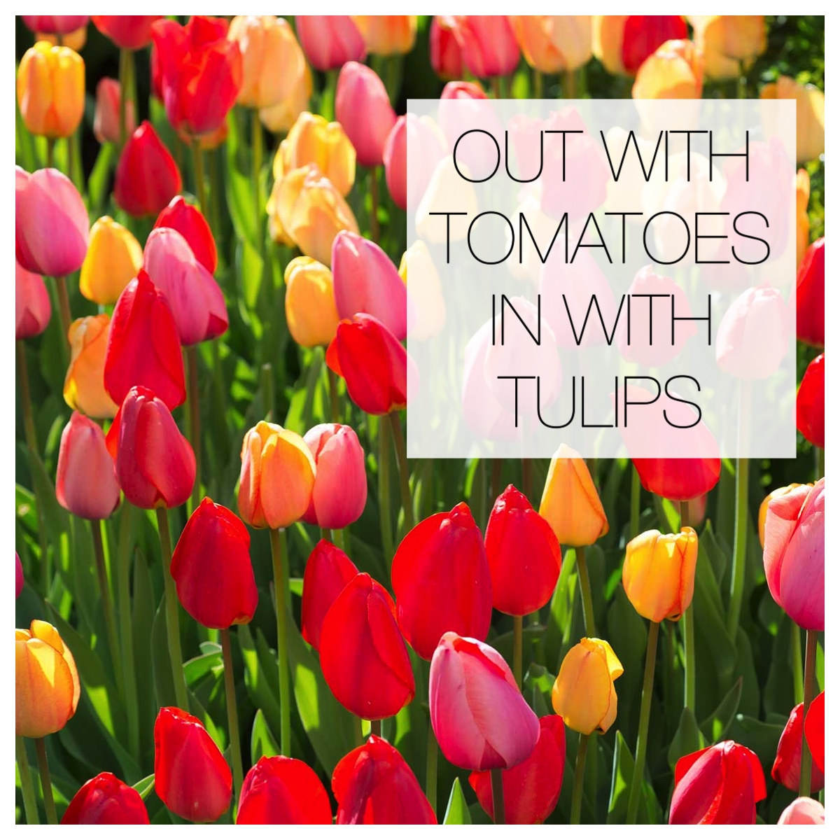 Out with the Tomatoes, In with the Tulips
