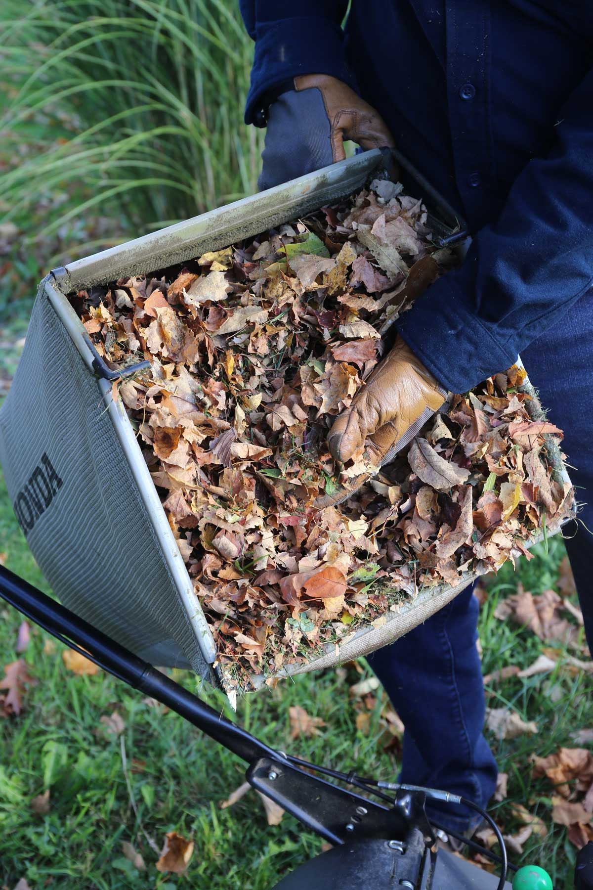 Shredded Leaves are Garden Gold - Longfield Gardens