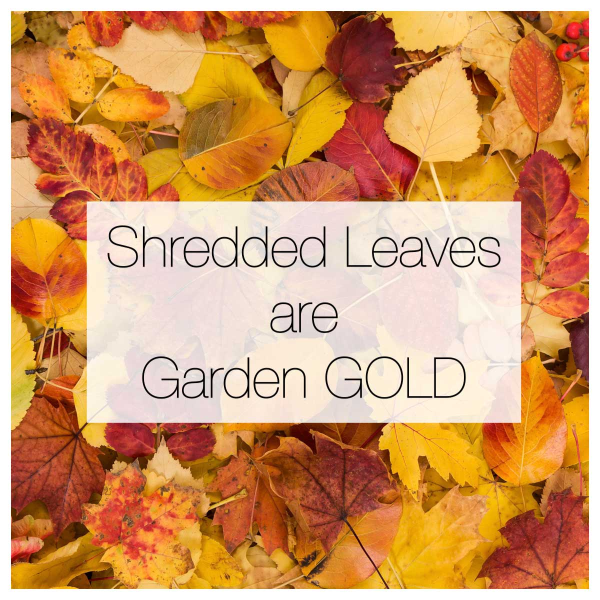 Shredded Leaves are Garden Gold—Longfield-Gardens