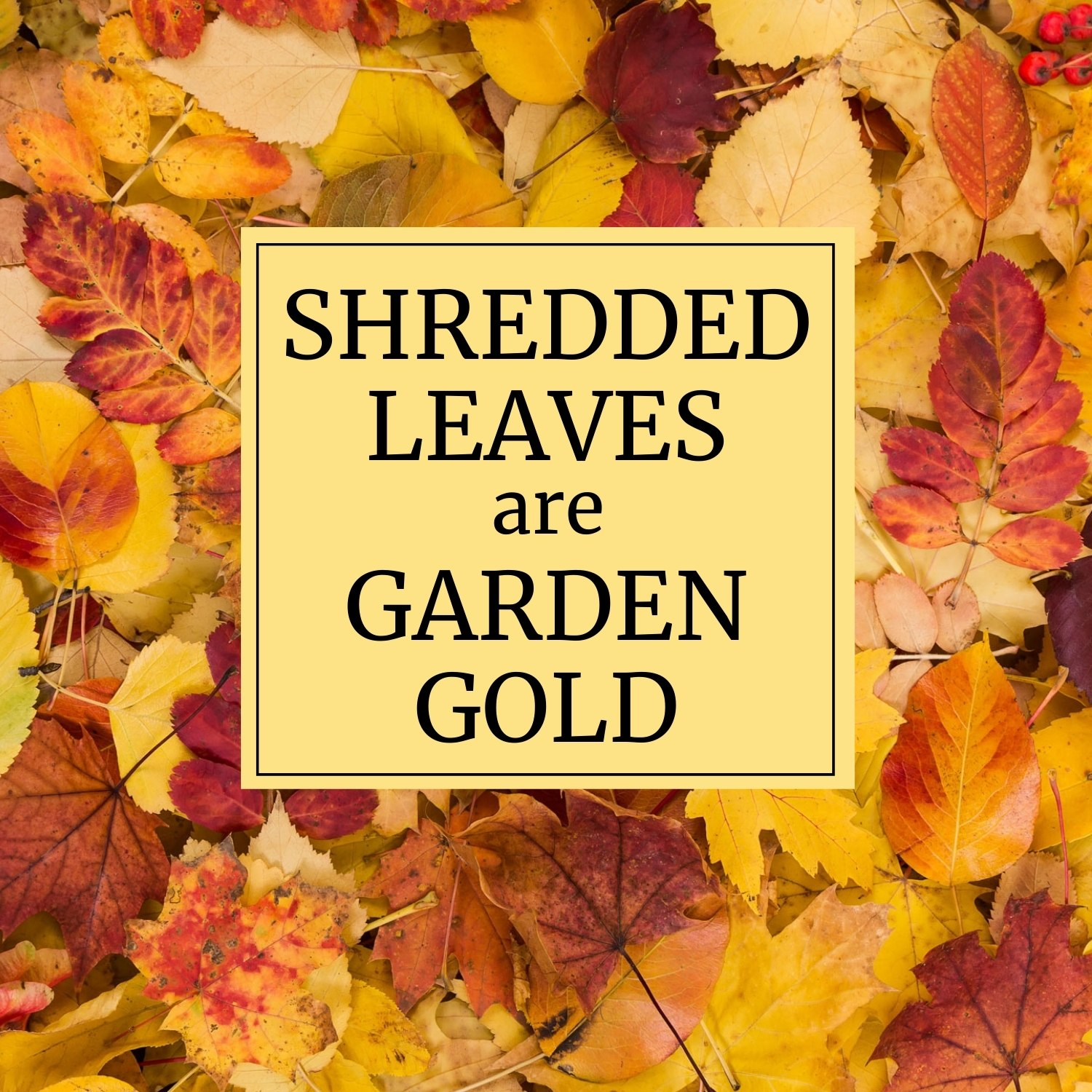 Shredded Leaves are Garden Gold