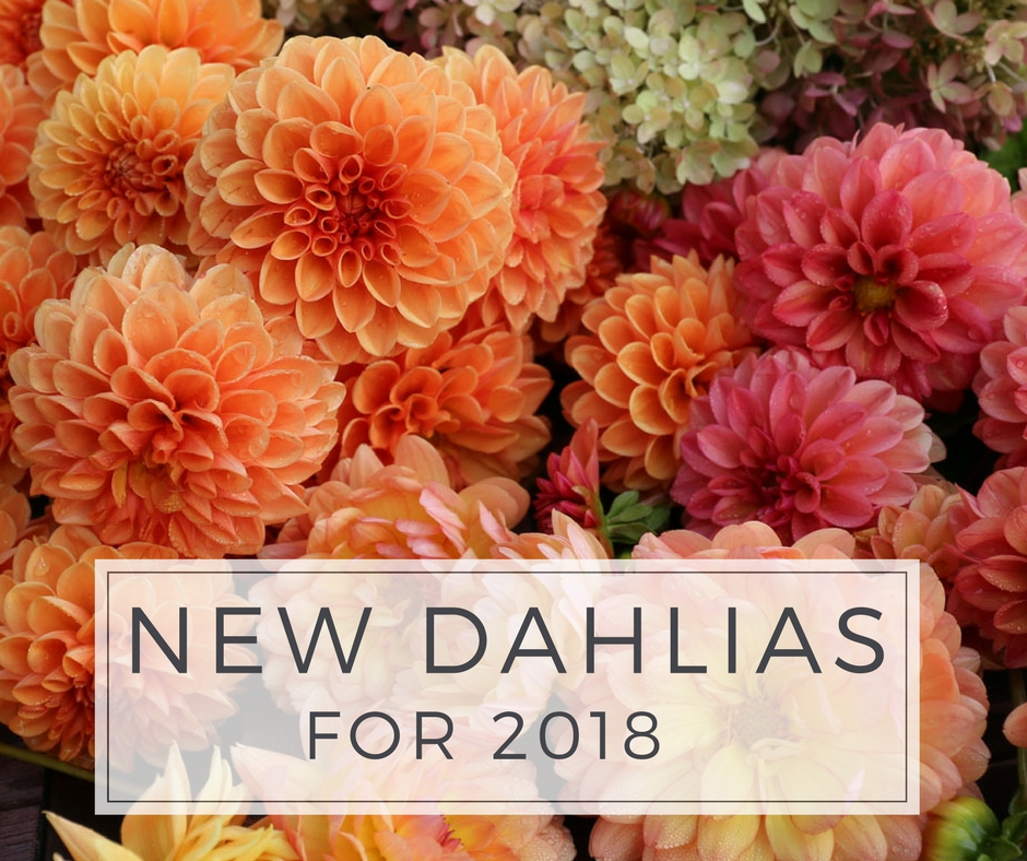 New Dahlias for 2018 - Longfield Gardens