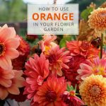 How to Use Orange in Your Flower Garden