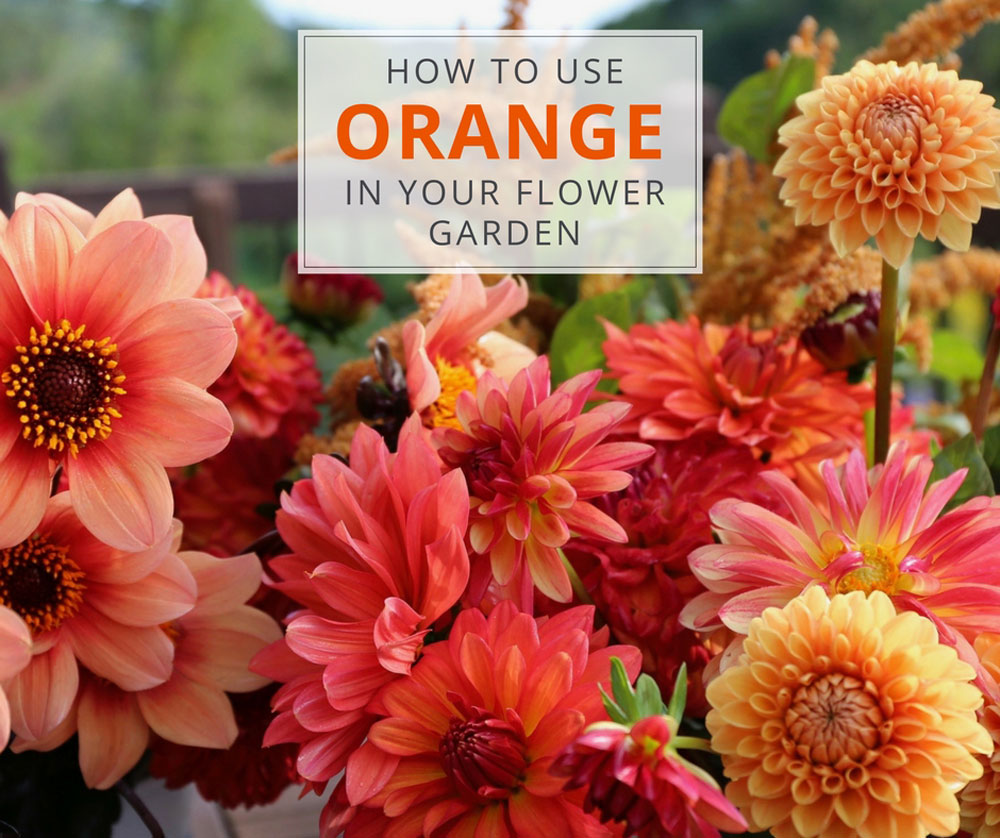 Designing an Orange Flower Garden