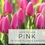 How to Use Pink in Your Flower Garden