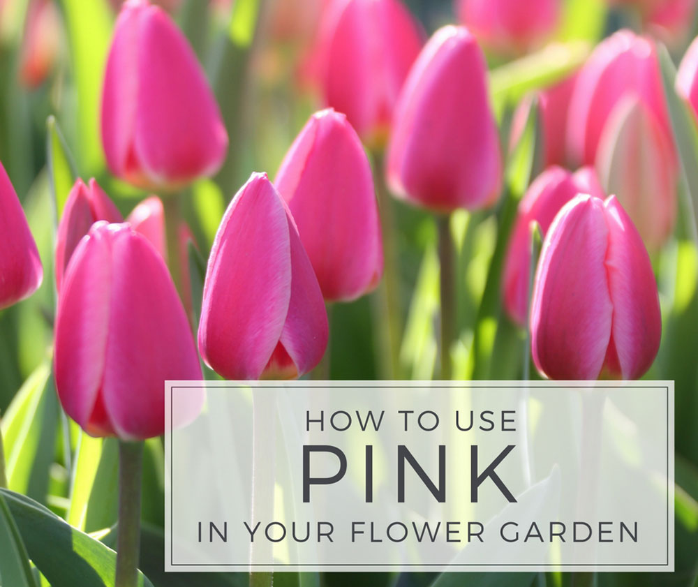 How to Use Pink in Your Flower Garden - Longfield Gardens