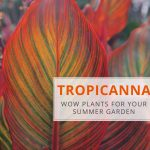Tropicanna: Wow Plants for Your Summer Garden