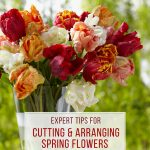 Expert Tips for Cutting and Arranging Spring Flowers