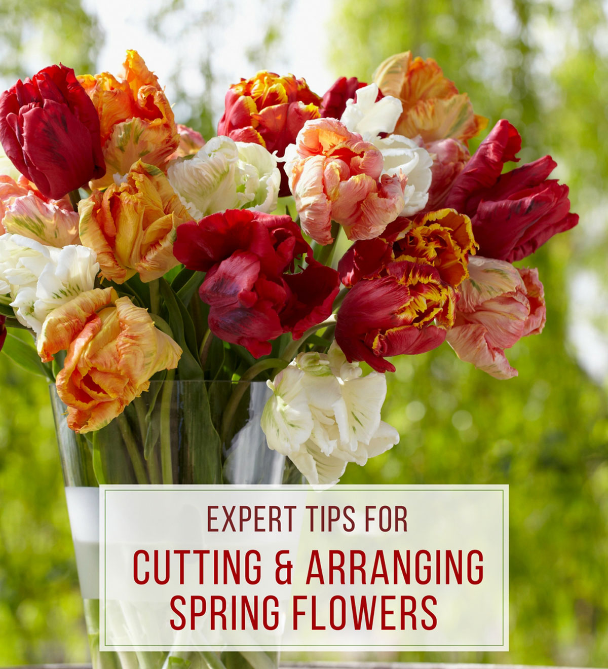 Expert-Tips-for-Cutting-&-Arranging-Spring-Flowers