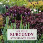 How to Use Burgundy Flowers and Foliage