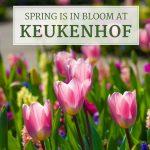 Spring is in Bloom at Keukenhof in Holland