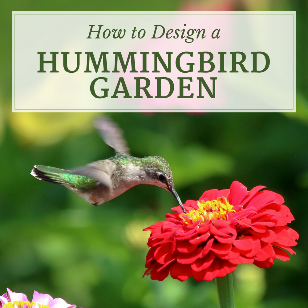 How to Design a Hummingbird Garden - Longfield Gardens