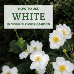 How to Use White in Your Flower Garden