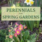 Best Perennials for Spring Gardens