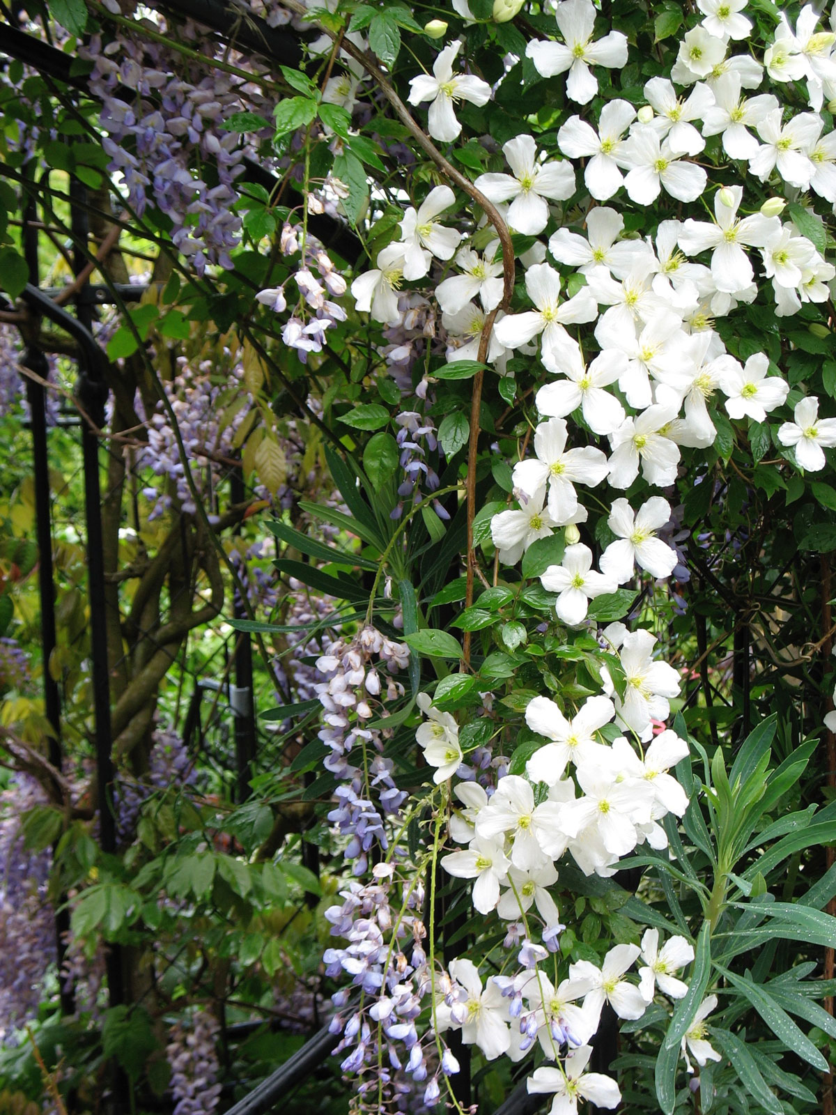 How to Use White in Your Flower Garden - Longfield Gardens