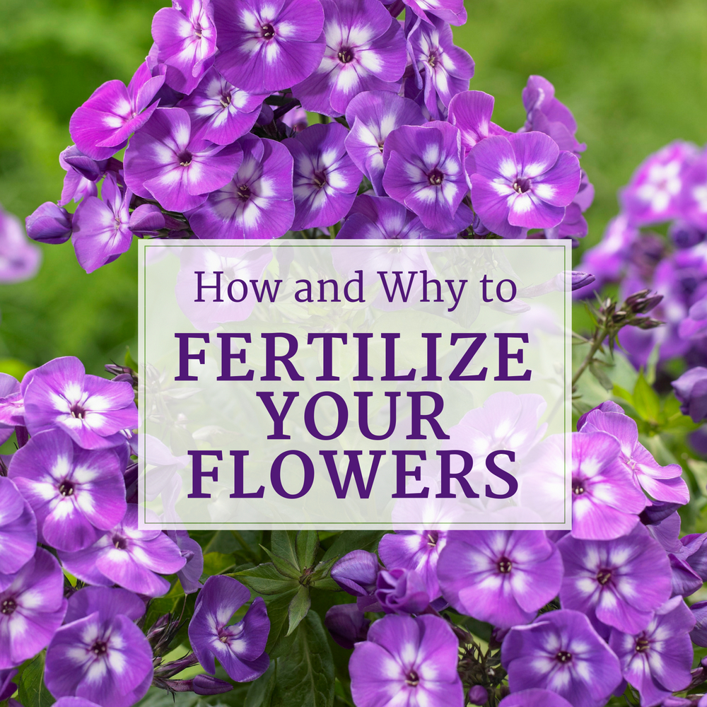 How and Why to Fertilize Your Flowers - Longfield Gardens